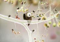 Botanicula pour mac