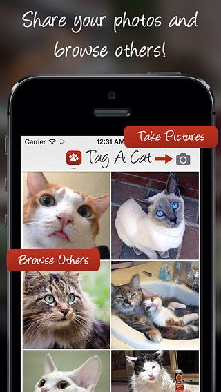 Tag A Cat - The Cat Pictures Sharing App pour mac