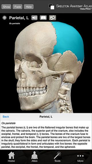 Skeleton Anatomy Atlas: Essential Reference for Students and Hea pour mac