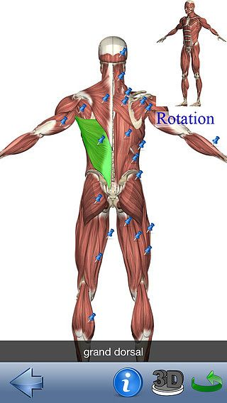 Visual Anatomy Lite pour mac